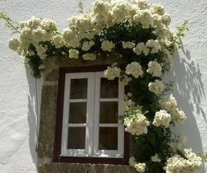 flowers, window, and white image