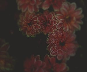 background, flowers, and bloemen image