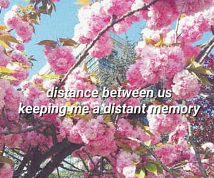 background, evergreen, and flowers image