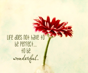 quotes, text, and flower image