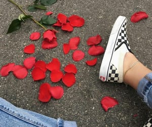 vans, rose, and red image