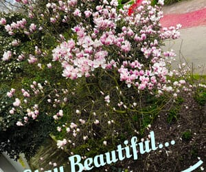 beaty, spring, and easel image