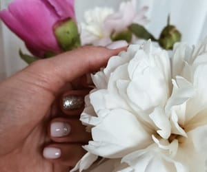 nails, rose, and peonies image