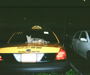 cat, car, and taxi image