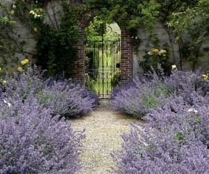 garden, flowers, and lavender image