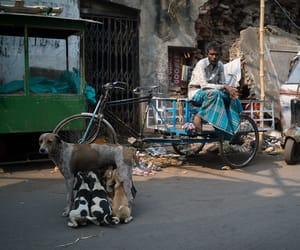 dog, sad, and streetphotography image