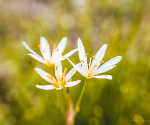 fine art photography, lensbaby, and flowers image