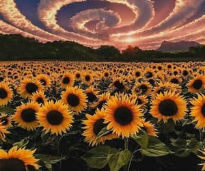 sunflower, flowers, and sky image