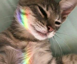 cat, rainbow, and animal image