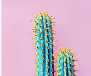 cactus, pink, and wallpaper image