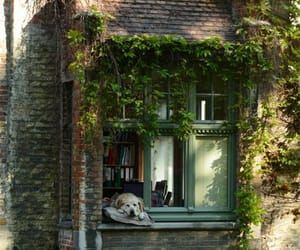dog and window image