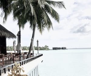 Maldives, ocean, and palm image