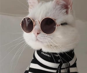 kitten, pet, and cat image