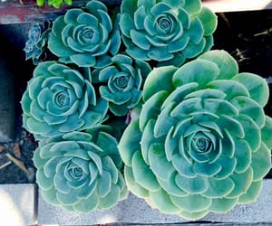 aesthetic, fresh, and garden image