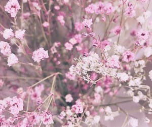 flower, pink, and summer image
