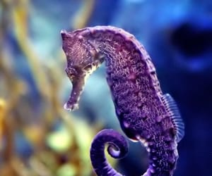 animal, sea, and seahorse image