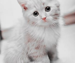 adorable, beautiful, and Sweetie image