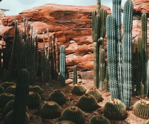 cactus, desert, and plants image