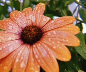 close-up, 🌼, and dew drops image