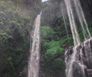 photography, rainforest, and travel image