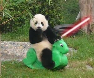 panda, darth panda, and sith panda image