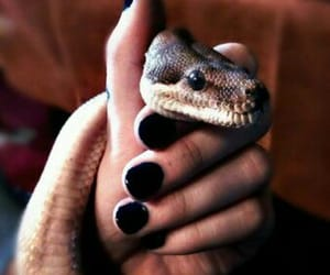 cool, snakes, and cold-blooded image