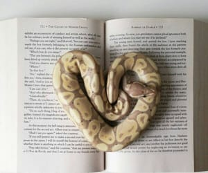 snake, book, and heart image