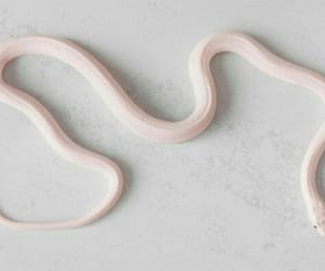 cool, scales, and snake image