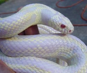snake image