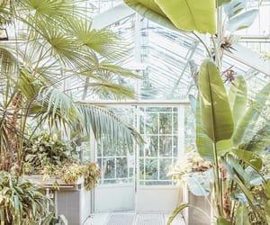 Belgrade, botanic garden, and botanical garden image