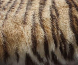 theme and animal image