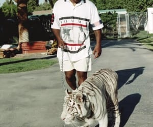 cat, tyson, and tiger image