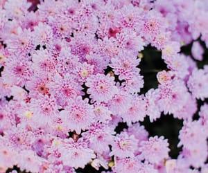 backround, flower, and beautiful image