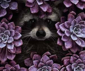 foto, photography, and animalitos image