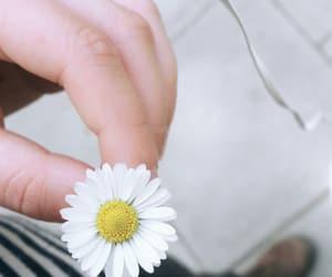 flower, wallflower, and wallpaper image