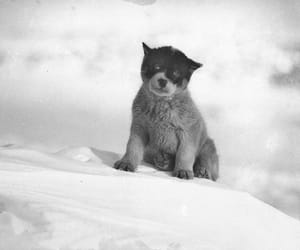 antarctica, cold, and puppie image