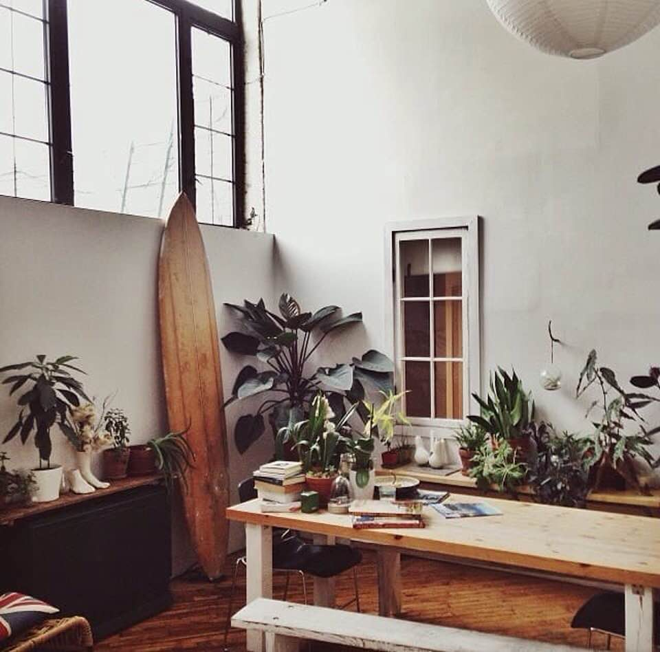 plants, house, and home image