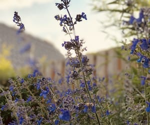 lavender, outdoors, and photography image