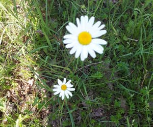campagne, nature, and marguerites image