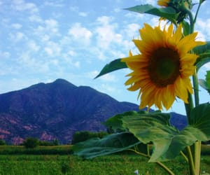 flowers, sunflower, and life image