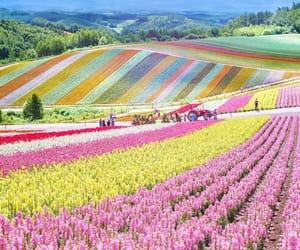 landscape, nature, and spring image