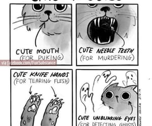 cat, cute, and lol image