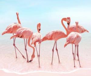 pink, flamingo, and sea image
