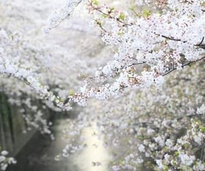 flowers, nature, and tree image