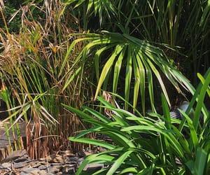 jungle, palm, and palme image