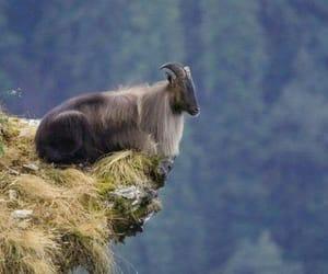 Animales, cabra, and naturaleza image