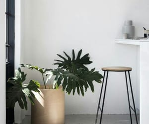 aesthetic, plants, and rooms image