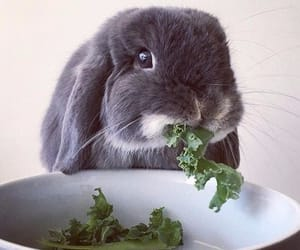 rabbit and eat image