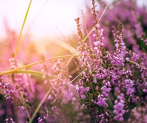 floral, lavender, and purple image