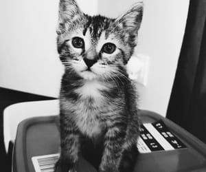 adorable, black and white, and funny image